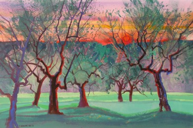 Ancient Olive Grove at Sunset, Quintole